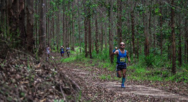 Corrida na floresta de eucaliptos